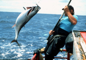 Mexico permits Bluefin fishing