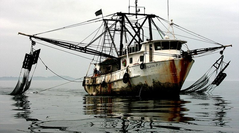 Federal government to increase regulation of imported seafood