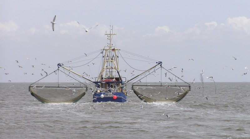 Illegal fishing bill forwarded to Pres. Obama's desk