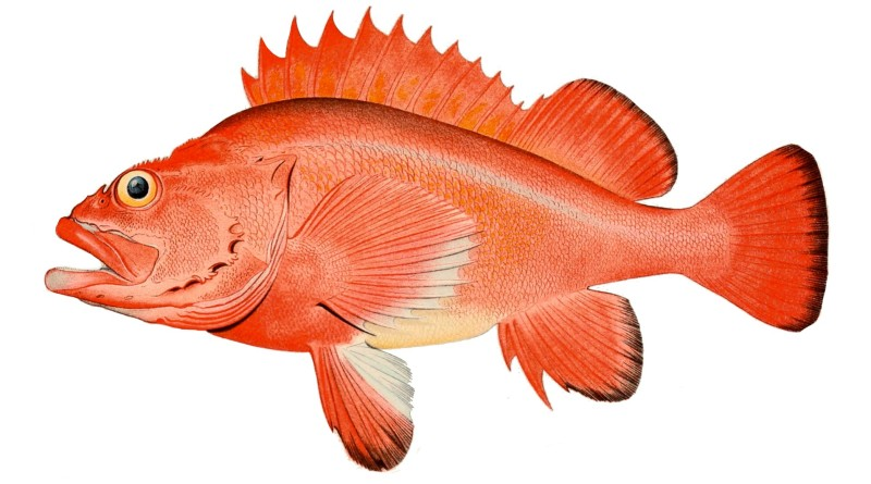 Rockfish season opens March 1