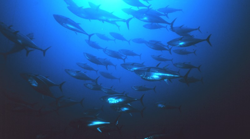 National Ocean Council committee publishes illegal fishing action plan