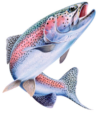 Season cuts of Bakersfield trout plants felt statewide
