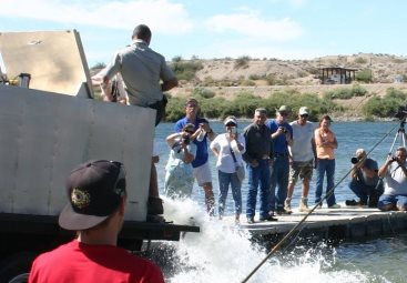 Hatchery trout plants resume on colorado river fishrapnews for Willow beach fishing report