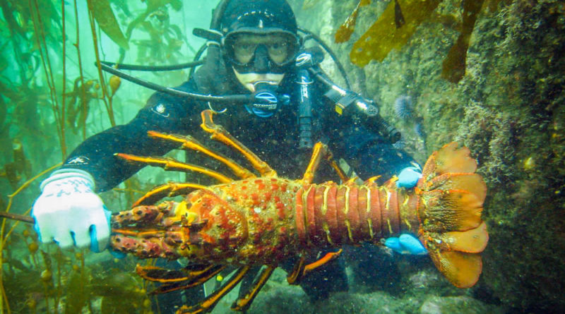Spiny Lobster MPA