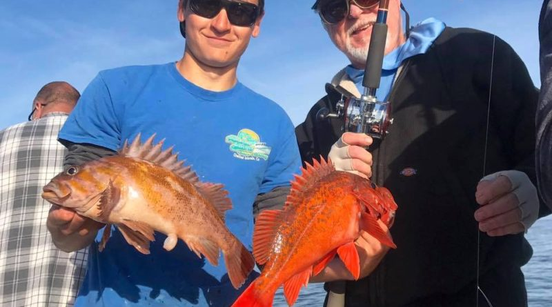Channel Islands Rockfish