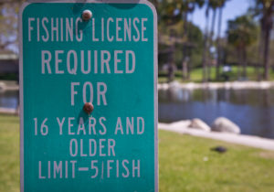 junior fishing license