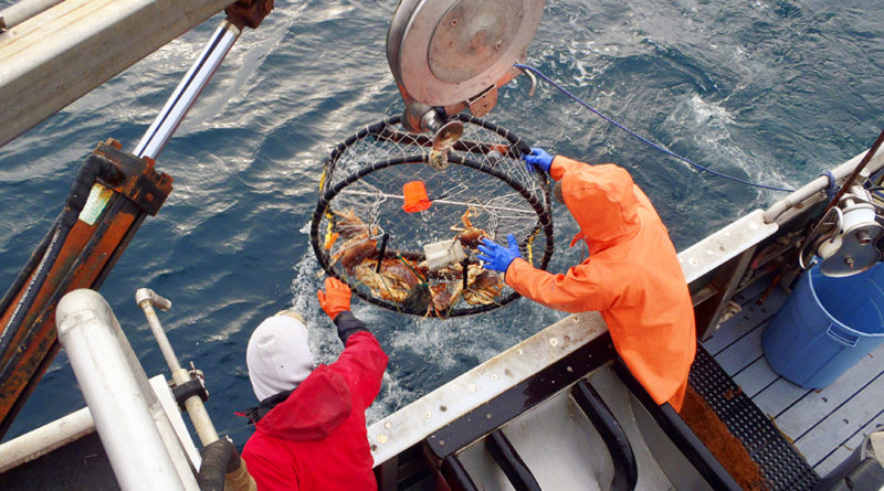 Bycatch Reduction Program - NOAA