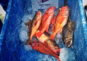 Bottom Fish Tourney - Southwestern YC photo