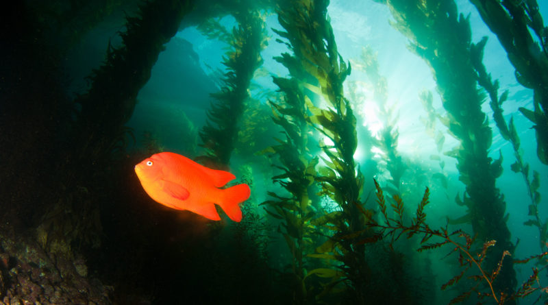 California habitat restoration - NOAA Fisheries photo