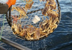 Dungeness Crab Fishery
