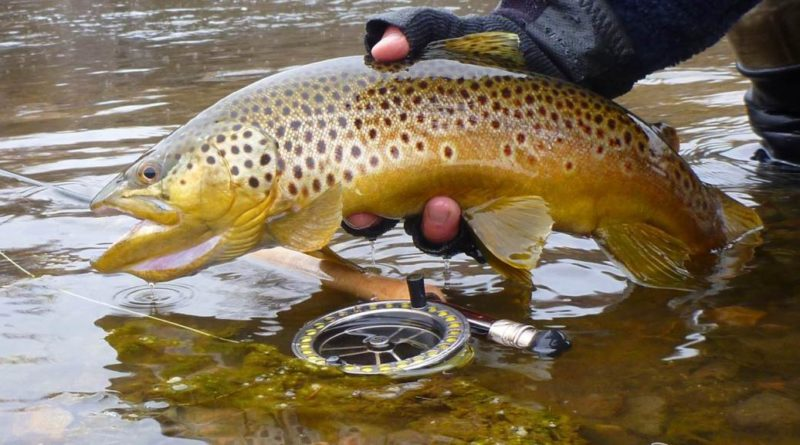 Trout Season Changes