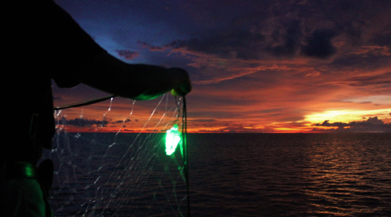 Illuminated drift gillnets